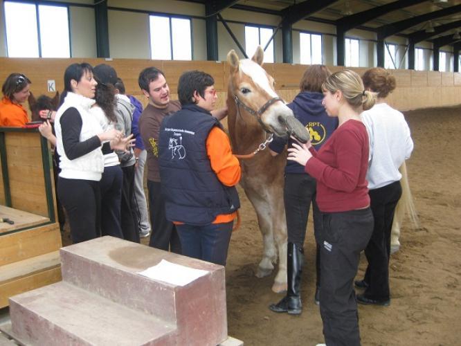 H γνώση της ιππασίας και της ιπποκομίας είναι απαραίτητες προϋπόθεσης για κάποιον που θέλει να γίνει ιπποθεραπευτης πρωτίστως όμως πρέπει να είναι φυσικό ή λόγο ή έργο θεραπευτής