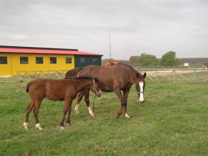 Μάνα και γιός!!!! Η Αλεξάνδρα και το πέντε μηνών πουλαράκι της! Είναι οι νέοι μας φίλοι στο Κέντρο Θεραπευτικής Ιππασίας Σερρών।